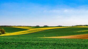 green field 2237485