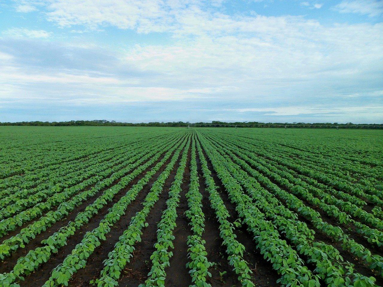 soybean field 1610754 1280
