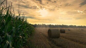 harvest 4195417 1920