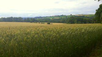 cornfield 6028216 1920