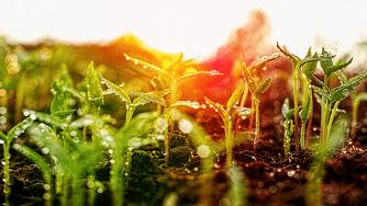 Blog CardImg planting