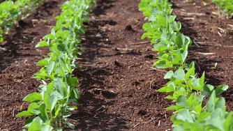 Blog CardImg soybeans 12