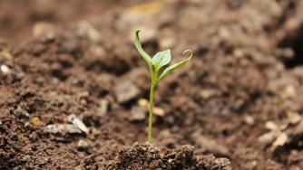 Blog CardImg Soil 1