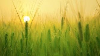 Blog CardImg barley