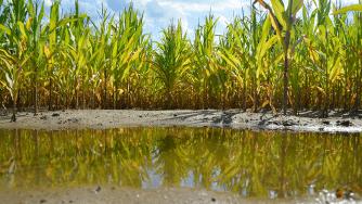 Blog CardImg corn rain