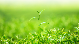 Blog CardImg crop model