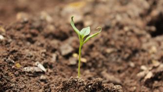 Blog CardImg soil