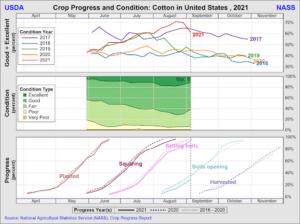 Figure 8 Crop Progress Cotton